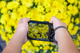 boy composes his picture of yellow flowers