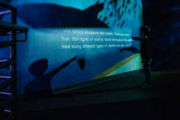 boy reads shark facts on wall at aquarium