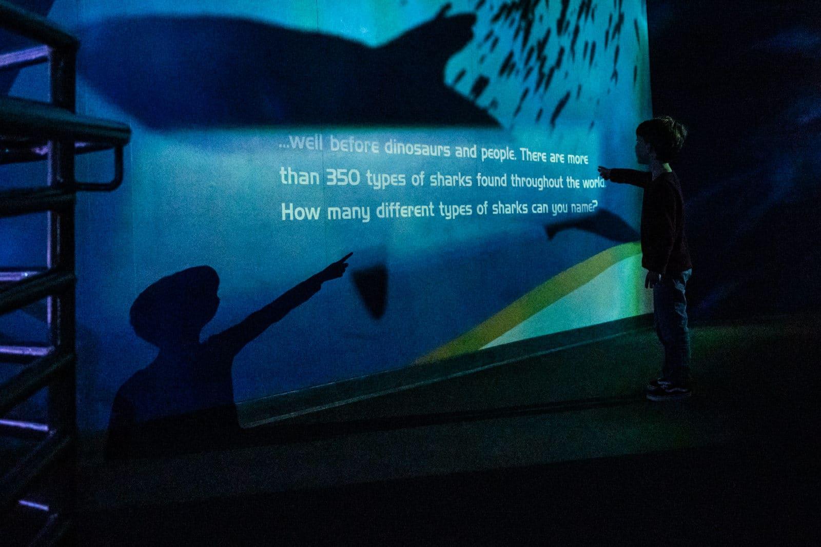 boy reads shark facts on wall at aquarium