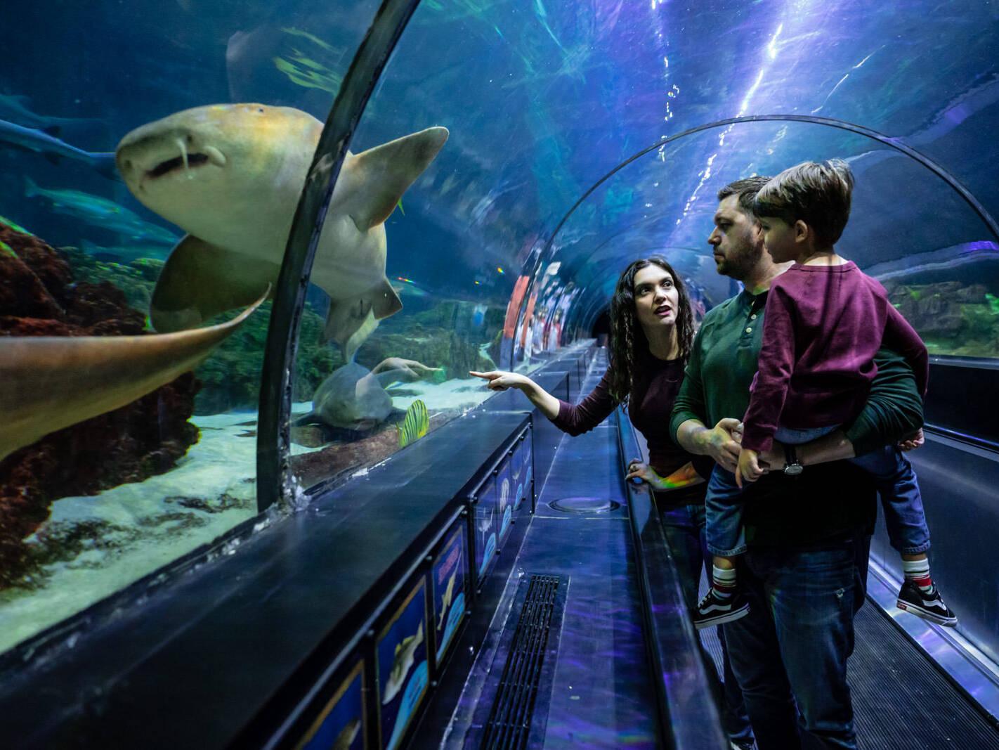 mom points out shark at seaward shark tank