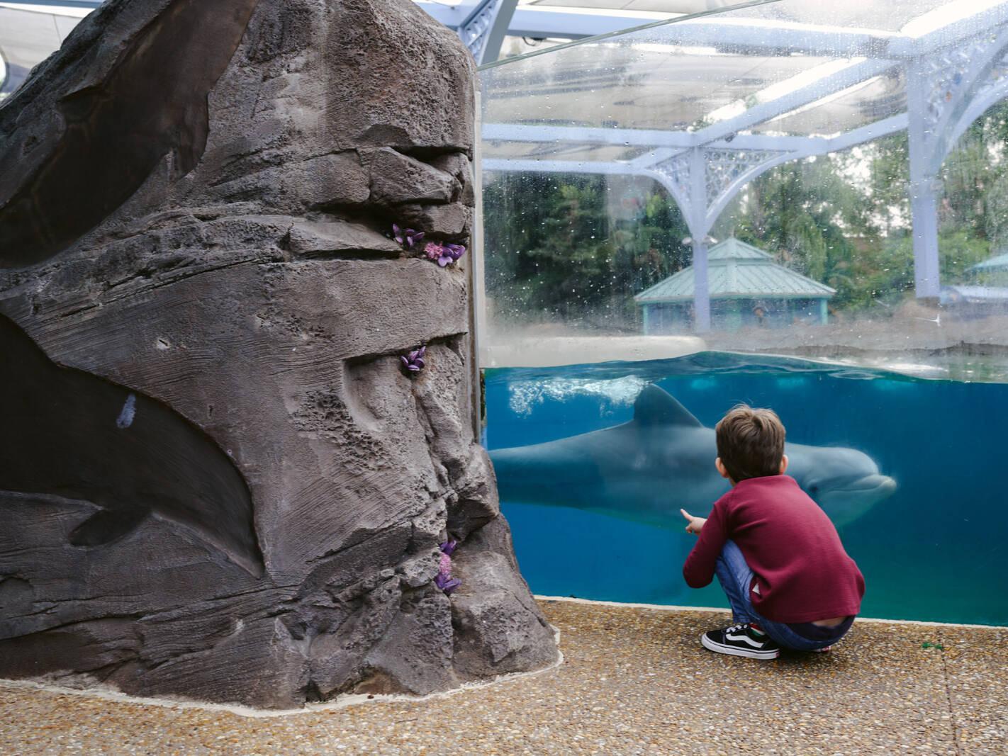 boy meets dolphin at SeaWorld