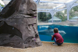 boy meets dolphin at SeaWorld