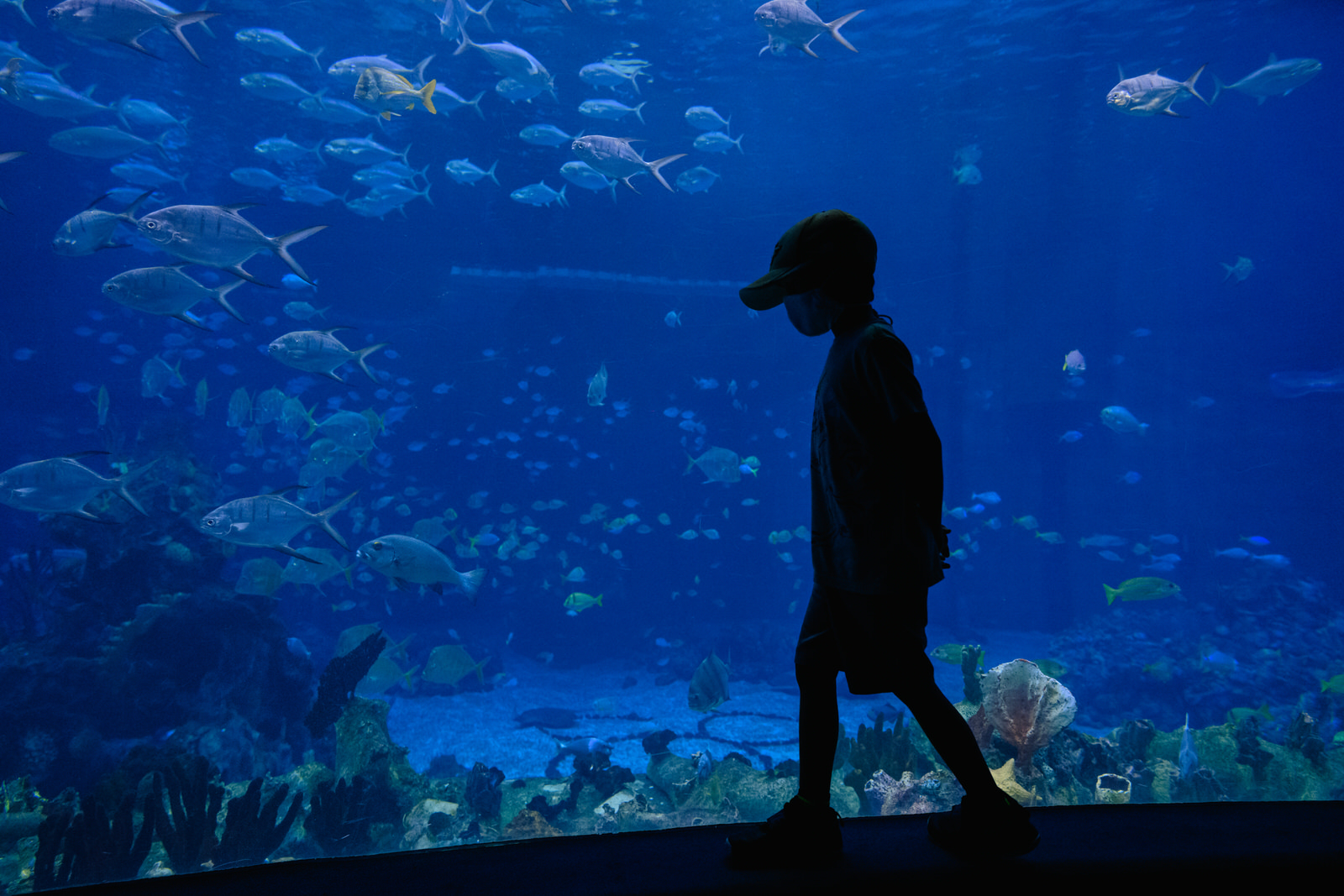 boys walks the aquarium past the hidden mickey