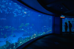oneway only inside the aquarium