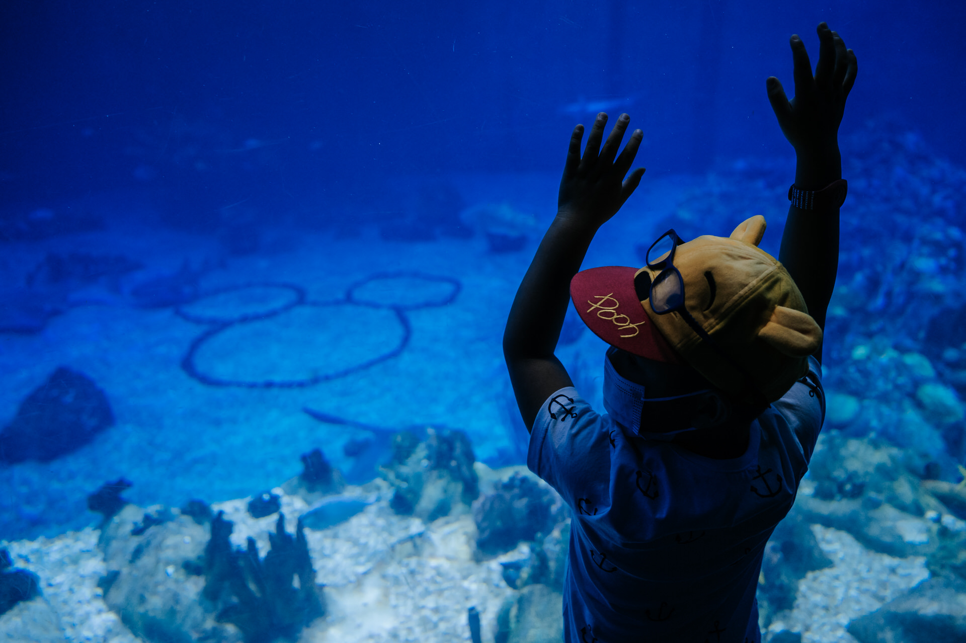 boy leans on aquarium wall in front of hidden mickey