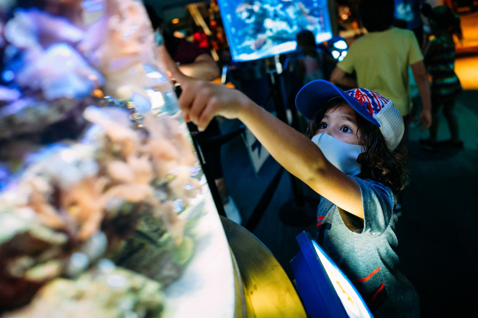 boy enjoys aquarium whiling wearing mandatory mask